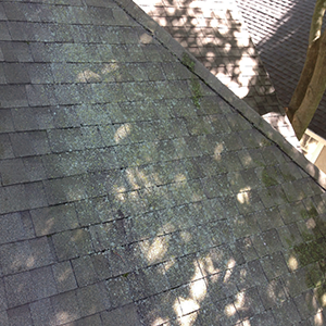 Roof Lichen Cleaning